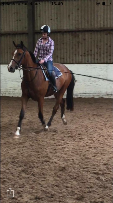 Weston Equestrian Centre Broodmares And Youngstock